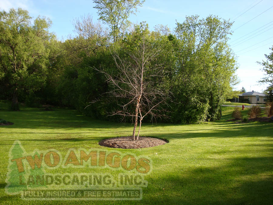 Randoms Gallery Archives Two Amigos Landscaping Inc